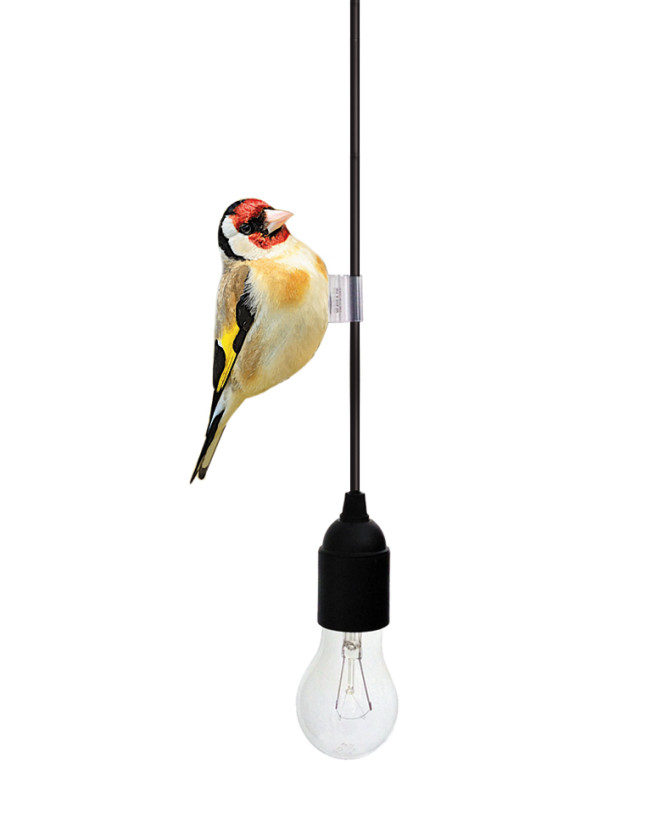 cablebirds_goldfinch_white_by_yeayea